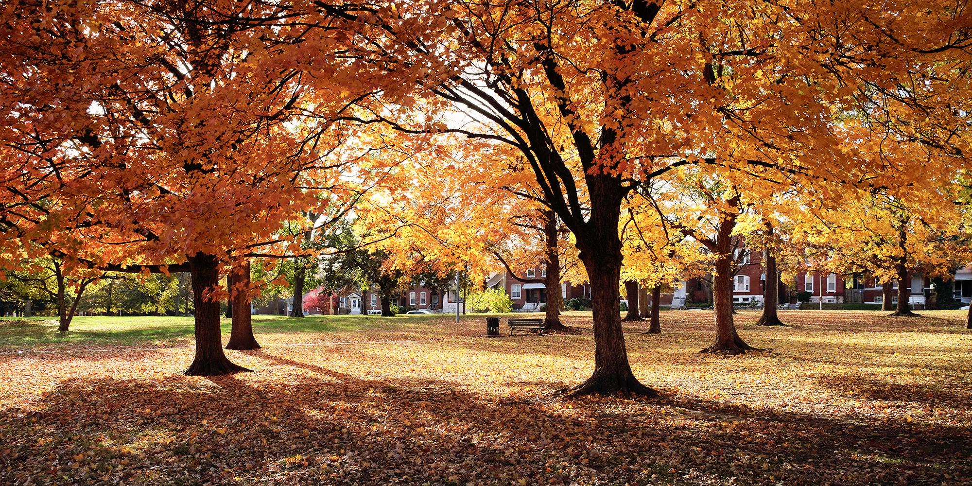 November Events in Dutchtown