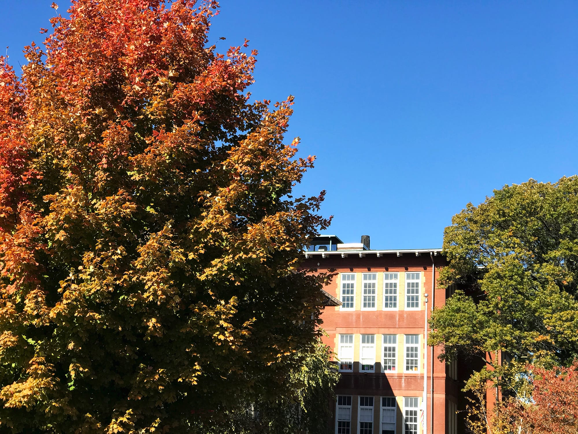 Fall foliage at Froebel School in Gravois Park.