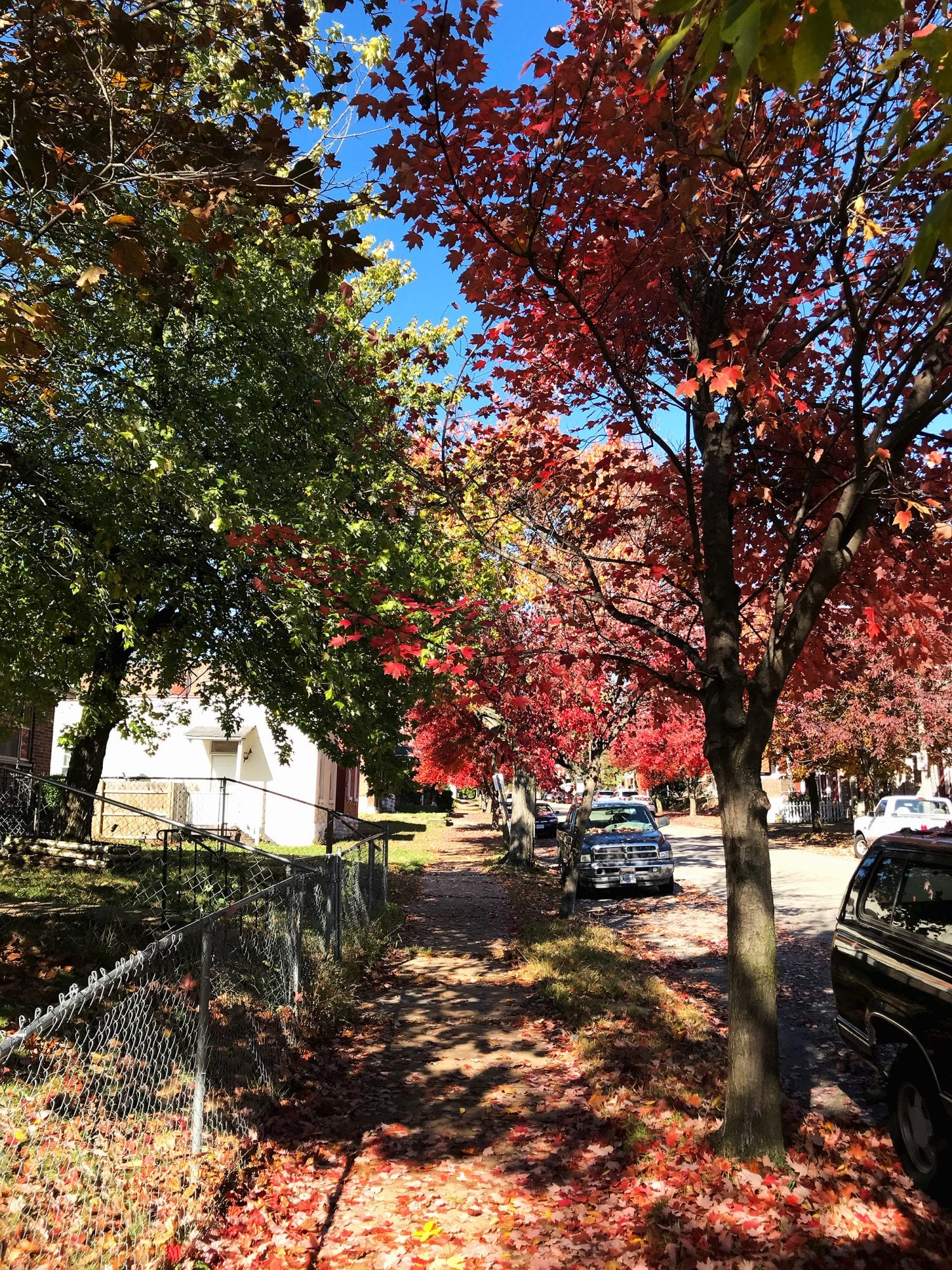 Fall foliage on Iowa Street in Gravois Park.
